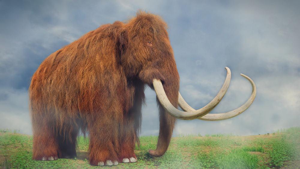 Mammoth Habitat